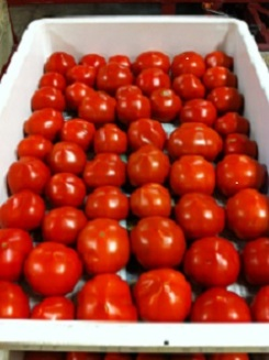 Tray_of_Tomatoes_IMG_0773