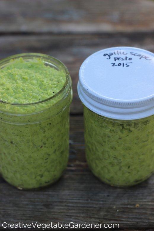 Garlic-Scape-Pesto